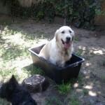 Gracie fürdik